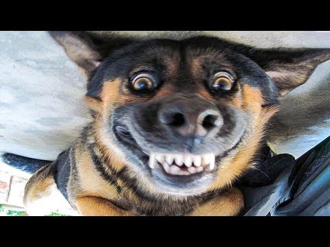 😁 Funniest 🐶 Dogs and 😻 Cats - Awesome Funny Pet Animals' Life Videos 😇 - UC09IvZwjpunzrdHH1EHok-w