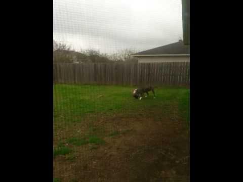 Adopt LOKI on Adopt-a-Pet.com