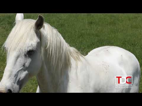 , TDC – TODAY SHOW Interviews Terry Paul and His Daughter Sydney on The Horse Farm, Wheelchair Accessible Homes
