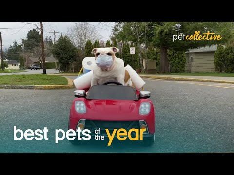 Top 20 Pets Who Think They're Human | Best Pets Of The Year 2020