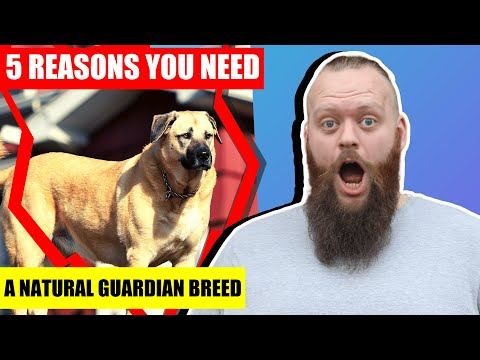 5 Reasons Why YOU Need A NATURAL Guardian Breed