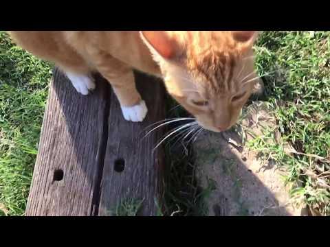 Rat Kill For Fox the Cat