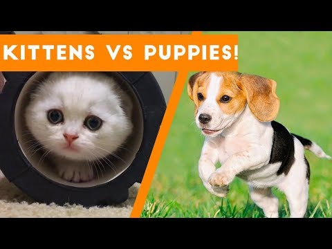 Try Not to AWW! at These Cute Kittens and Funny Puppies | Funny Pet Videos - UCYK1TyKyMxyDQU8c6zF8ltg