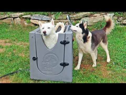 5 Dog Gadgets Put to the Test - Part 8 - UCe_vXdMrHHseZ_esYUskSBw