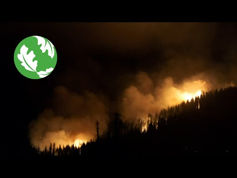 Our Planet's Determining Decade