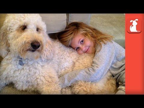 Labradoodle Service Dog Changes Little Girl's Life - UCPIvT-zcQl2H0vabdXJGcpg