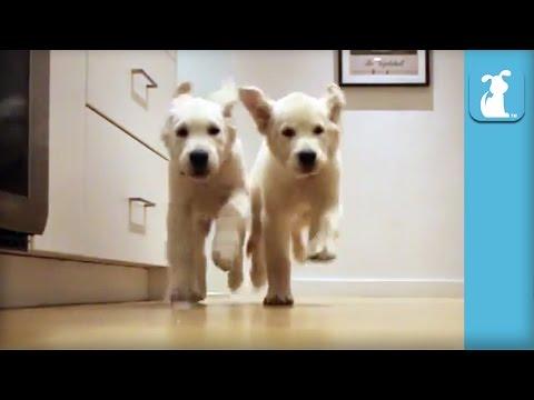 Adorable Puppies Running For Dinner Time-lapse - Puppy Love - UCPIvT-zcQl2H0vabdXJGcpg