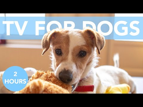 DOG TV: Rainy Day Relaxing Fun TV for Dogs and Humans!