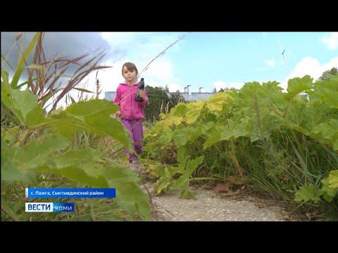 Оперативный штаб по борьбе с борщевиком планирует уничтожить главный сорняк Коми