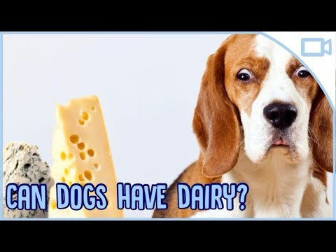 Can Dogs Eat Dairy?
