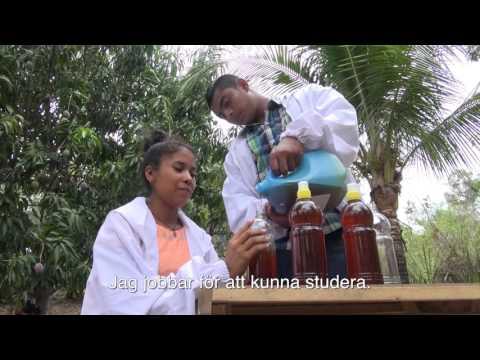 Möt honungskooperativet i El Salvador