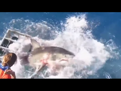 Shark breaks into cage while diver still inside!
