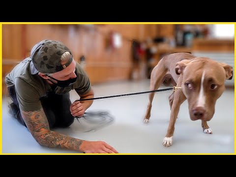 TERRIFIED PITBULL'S LIFE CHANGED AFTER THIS...