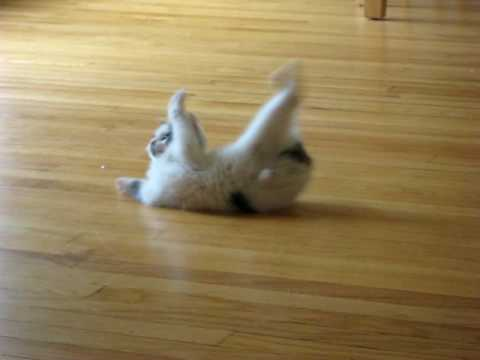 The funniest kitten in the world - UC3DSvrkJfQuZhLiPrkI5Sug