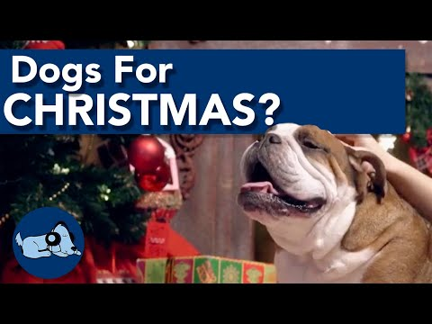 Should You Buy Someone a Dog for Christmas?