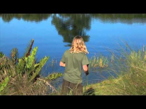 Failed get a good footage of baby alligator! - UCTs-d2DgyuJVRICivxe2Ktg
