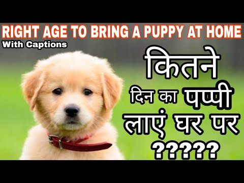 Right AGE to Bring A Puppy At Home | How Many Days Mother Feeding is Necessary for Puppies? | SSSDT