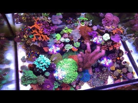 A Tour of Spy's Reef, AKA Prodigal Cube