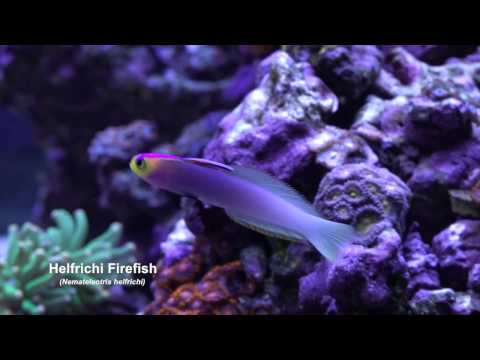 Mr. Saltwater Tank February 2017 450 Gallon Build Tank Update