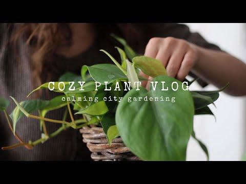 A Cozy Plant Vlog   Calming City Gardening
