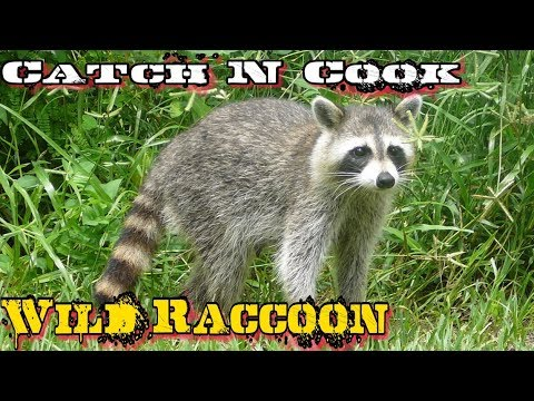 Catch N Cook Wild Trash Panda - Slow Cooked over Open Fire!