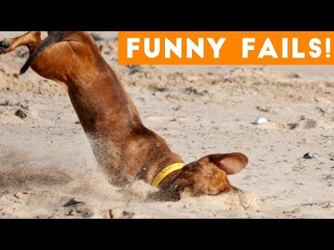 Funniest Pet Fails Compilation August 2018 | Funny Pet Videos
