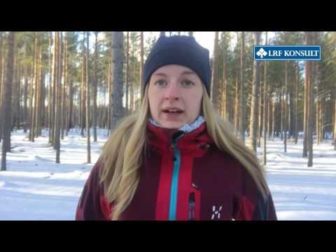 Linnea Åkerlund, Skogsekonom, LRF Konsult