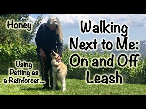Walking next to me - On and Off Leash (Honey)