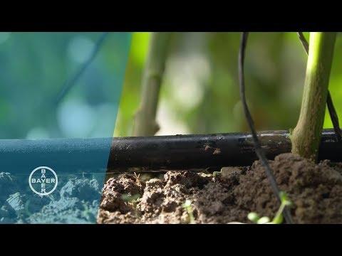 Drip Irrigation: Little Drips, Big Impact