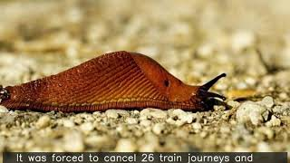 Slug blamed for stopping trains, delaying 12,000 people in Japan