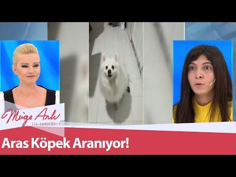 23 Şubat'ta kaçırılan Aras Köpek aranıyor - Müge Anlı ile Tatlı Sert 26 Şubat 2021