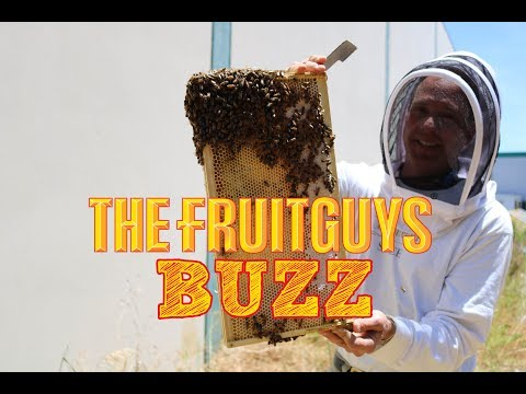The latest buzz on The FruitGuys bees!