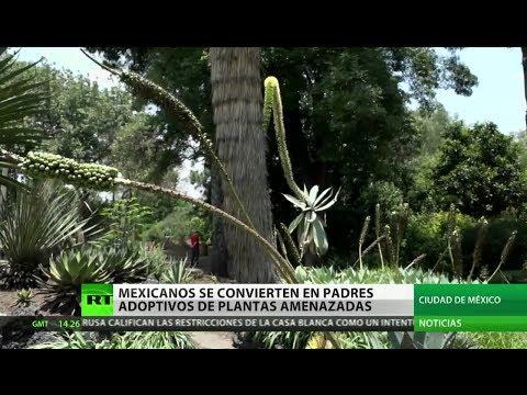 Mexicanos se convierten en padres adoptivos de plantas amenazadas