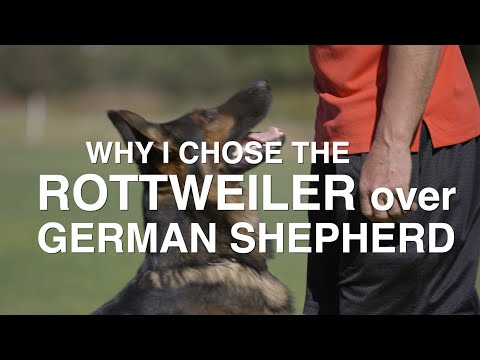 WHY I CHOSE THE ROTTWEILER OVER THE GERMAN SHEPHERD