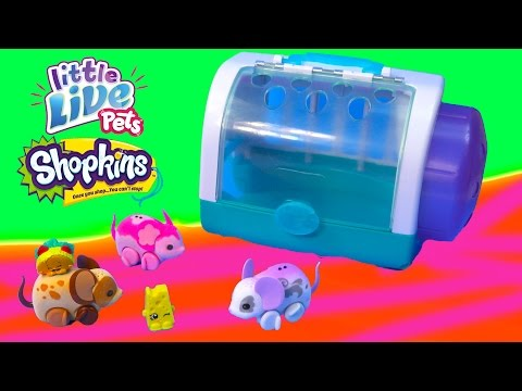 Shopkins Season 3 Taco Terrie Chee Zee Ride Little Live Pets 'Lil Mouse Toy Unboxing Review Video - UCelMeixAOTs2OQAAi9wU8-g