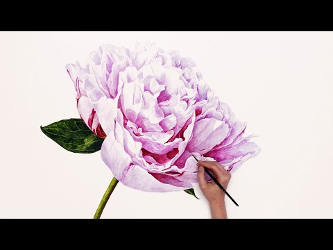 Painting a BIG Peony in watercolor - a time-lapse with Anna Mason