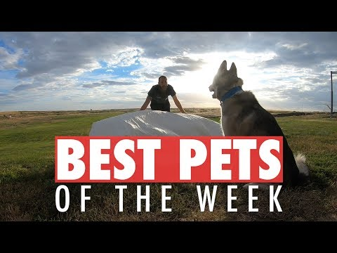 Best Pets of the Week | July 2018 Week 2 - UCPIvT-zcQl2H0vabdXJGcpg