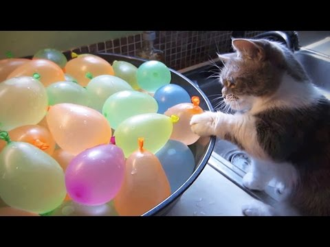 Cats VS Balloons 😂🎈 Funny Cats Playing With Balloons [Funny Pets] - UCeZe0VwwhEf8KTI2FHfJtTg
