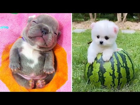 Baby Dogs 🔴 Cute and Funny Dog Videos Compilation #9   30 Minutes of Funny Puppy Videos 2021 - UCbHvtJxBXUzpB_iXfJLIvjA