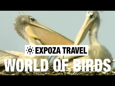 The World Of Birds (Africa) Vacation Travel Video Guide - UC3o_gaqvLoPSRVMc2GmkDrg