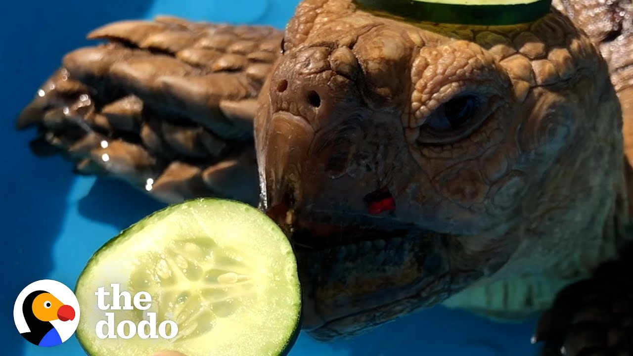 Tortoise Is Really Into Spa Day | The Dodo