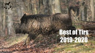 BEST OF TIRS SANGLIERS 2019 - 2020