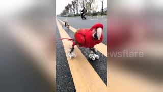 Smart parrot shows off its incredible skills as a trick rider