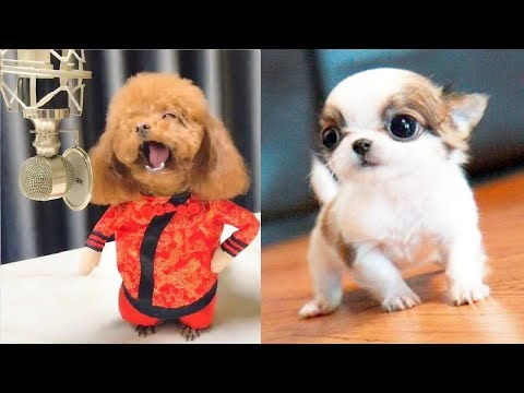You will laugh at all the DOGS 🤣 Funny DOG Videos 😂🐶 - UCbNJI1n9Px_3auWRUV5hMiA
