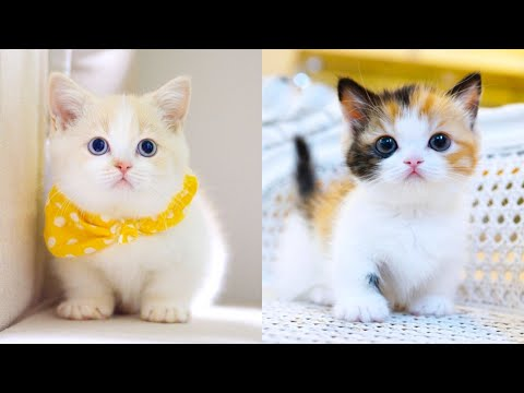 Baby Cats - Cute and Funny Cat Videos Compilation #15 | Aww Animals - UC8hC-augAnujJeprhjI0YkA