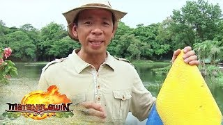 Kuya Kim discusses how Baler became the birthplace of surfing in the Philippines | Matanglawin