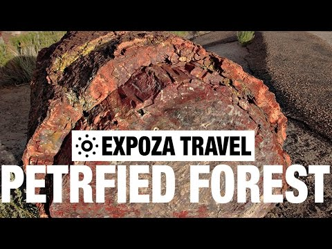 Petrified Forest Vacation Travel Video Guide - UC3o_gaqvLoPSRVMc2GmkDrg