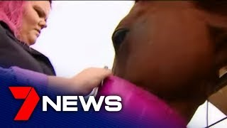 Rural View mother issues plea over rogue stallion in neighbourhood   7NEWS