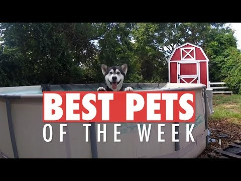 Best Pets of the Week | December 2017 Week 1 - UCPIvT-zcQl2H0vabdXJGcpg