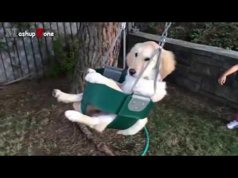 Funny Puppies :-) - UCDNA9KWlfiOFHlaG7Lhe5pQ